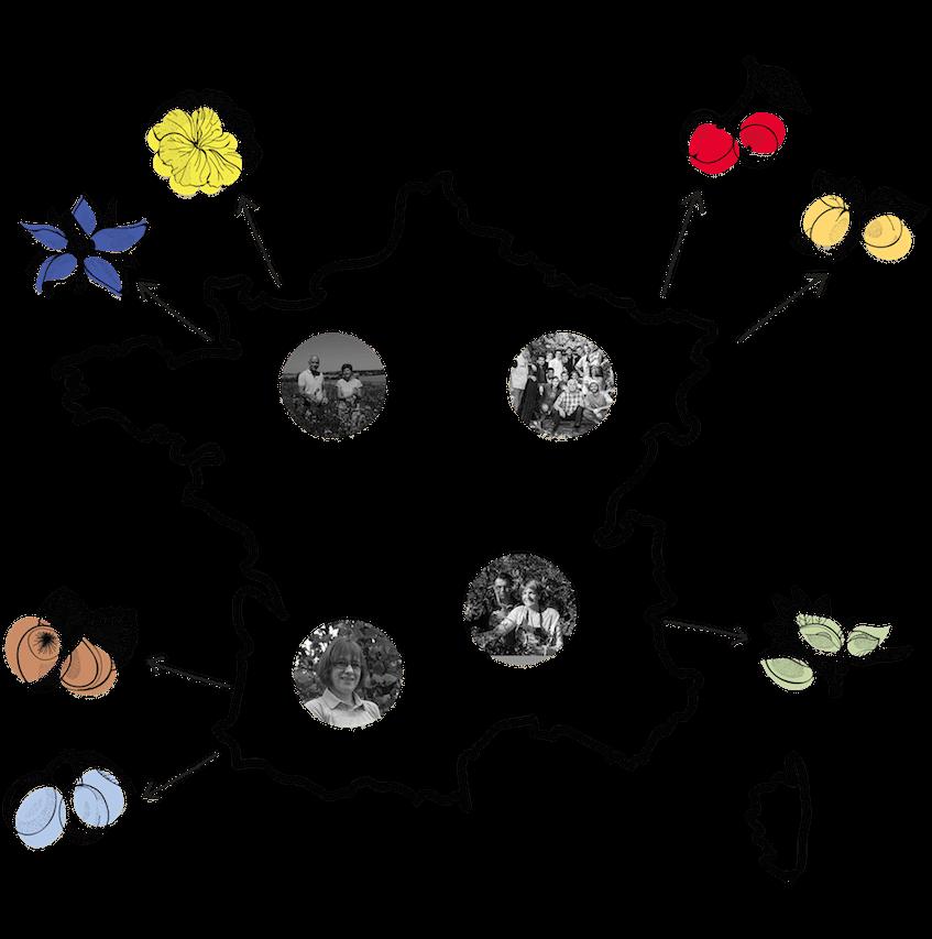 https://www.marques-de-france.fr/wp-content/uploads/2019/04/Oden_origine-plantes.png